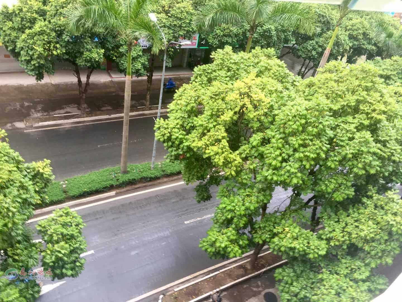 周围绿化.jpg